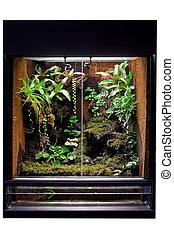 rain forest terrarium