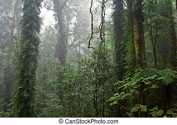 rain forest - the beauty of nature in the dorrigo world...