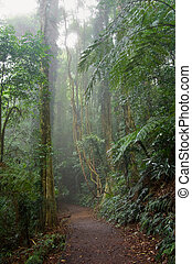 the beauty of nature in the dorrigo world heritage rainforest on a foggy day