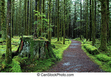 Rain Forest trail in Golden Ears Park British Columbia