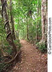 rain forest trail Tablelands Australia