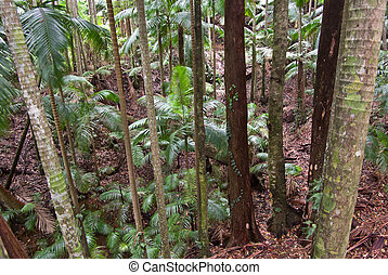 rain forest trees