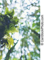 Rain-Forest Trees, Tree of Light