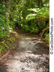 Rain forest walk at Queen Charlotte Track in Marlborough Sounds New Zealand