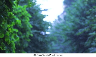 rain. green trees in the background. avenue of trees. slow motion.