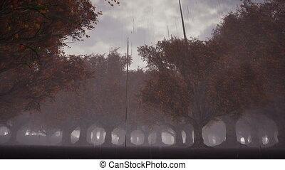 Rain in a gloomy forest