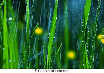 Rain in garden - rain in garden