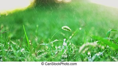 Rain in summer day pouring on green grass backlit