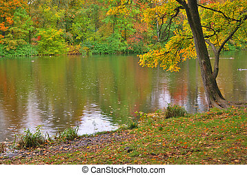 Rain in the autumn park