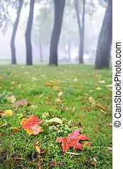 Rain in the fall park