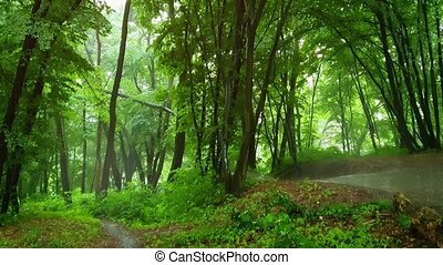 Rain in the oak forest. Stock footage with natural sound
