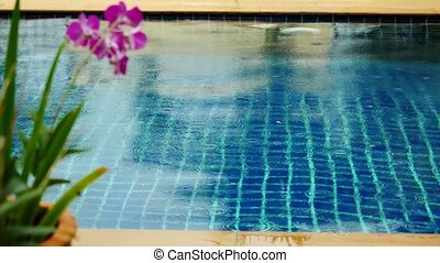 Rain in the pool against the foreground of a flower frangipani.