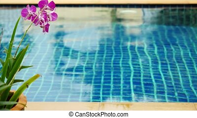 Rain in the pool against the foreground of a flower frangipani to changed focus from blurred.