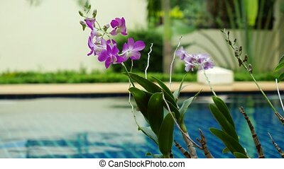 Rain in the pool against the foreground of a flower...