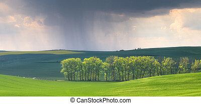 Rain in the spring fields