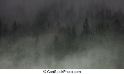 rain in the wood in mountains