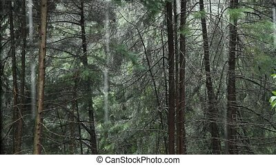Rain in the Woods - Digital Video. Recorded in FullHD.