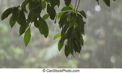 Rain in tropical rainforest