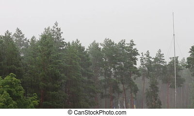 Rain on a background of trees.
