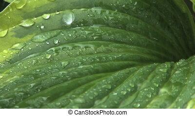Rain on Leaves 2