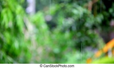 Rain on plants and trees with blurred background. Shift in focus from near to far distances and back with professional lens