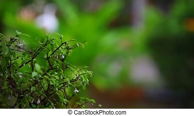 Rain on plants and trees with blurred background have a sound. Shift in focus from near to far distances and back with professional lens