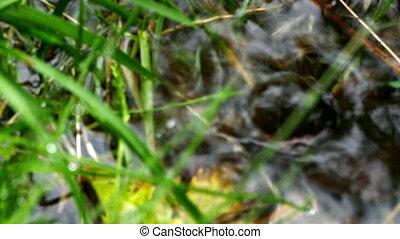 Rain on the grass close