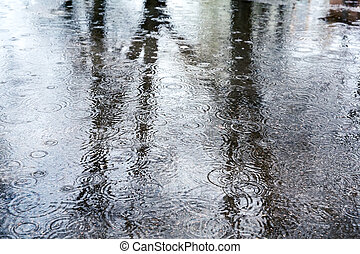 Rain - Reflection of trees in a rain puddles