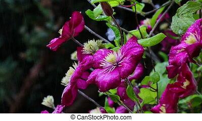 Rain shower on colorful flowers. HD