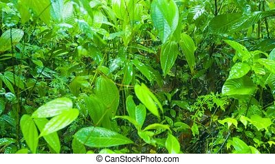Rain Soaking Dense Jungle Undergrowth in Thailand