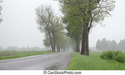 rain water asphalt