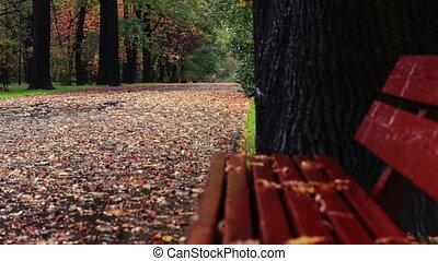 Rain weather in autumn park
