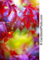 Rain. Wet red autumn leaves