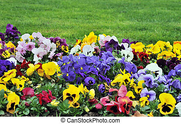 Rainbaw flowerbed - flowerbed full of all colors flowers and...