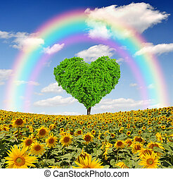 rainbow above the sunflower field with tree from the shape...