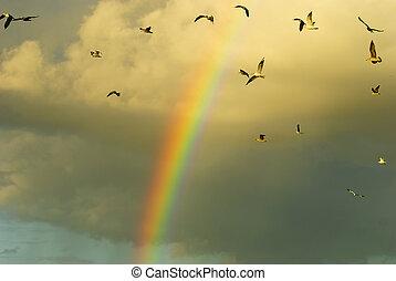 Rainbow and flying birds - gull, rainbow and flying birds.