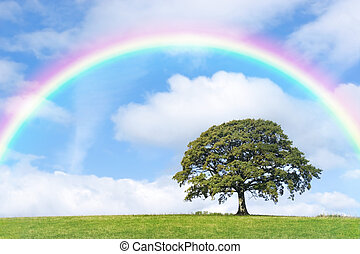 Rainbow Day - Oak tree in summer in a field, with a rainbow,...