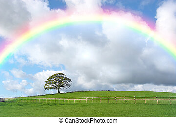 Rainbow Day - Rural landscape in autumn with an oak tree and...