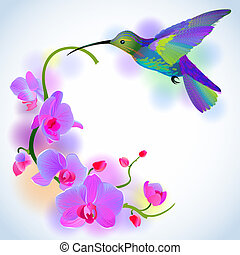 Rainbow humming-bird with orchids - Vector greeting...