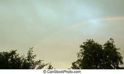 Rainbow in the sky, above the trees, against the background of gray clouds, after the rain