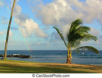 Rainbow over PAcific ocean on a windy day on Kauai, Hawaii islands stretches between two palm trees. Peaple are swimming in a small protected bay, while their cooler sits under a taller tree.