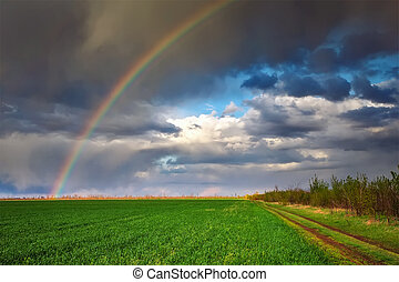 Rainbow over a spring green field. Beautiful landscape