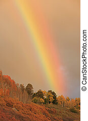 Rainbow over aspen forest, Colorado