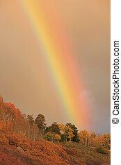 Rainbow over aspen forest, Colorado
