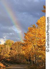 Rainbow over aspen trees, Colorado