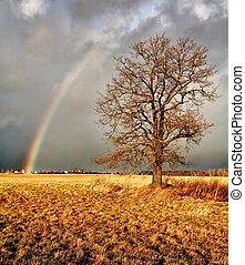 Rainbow over ? field.