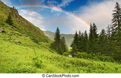 Landscape with forest and rainbow