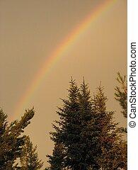 Rainbow over pines