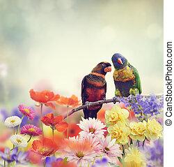Rainbow Parrots(Rainbow Lorikeet)