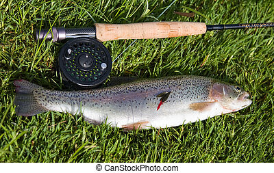 Rainbow trout and rod